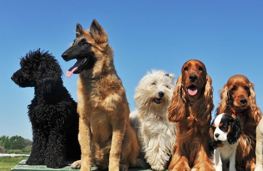 Hundebarnehage 2